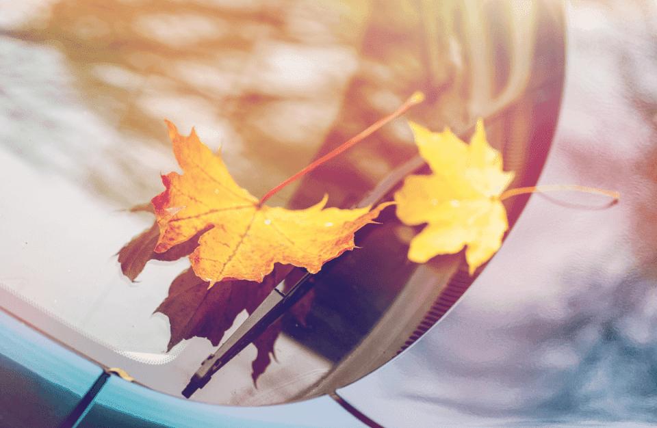 Jesienny przegląd samochodu – pamiętaj o szybach
